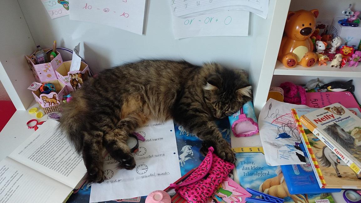 Homöopathie für Katze Leo!