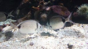SEA LIFE Knutschfische