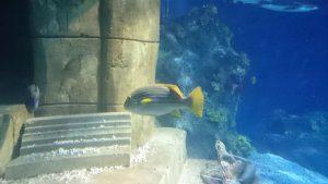 SEA LIFE Streifenfisch
