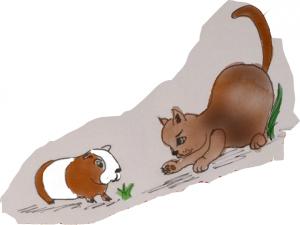 Fressen Katzen eigentlich Meerschweinchen?