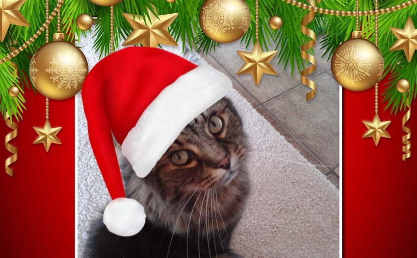 #sinnvollschenken – keine Tiere unterm Weihnachtsbaum!