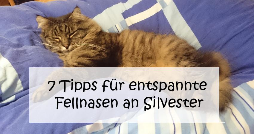 7 Tipps für eine entspannte Katze an Silvester