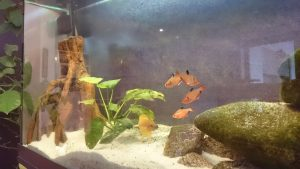 Haustier und Kind - Aquarium