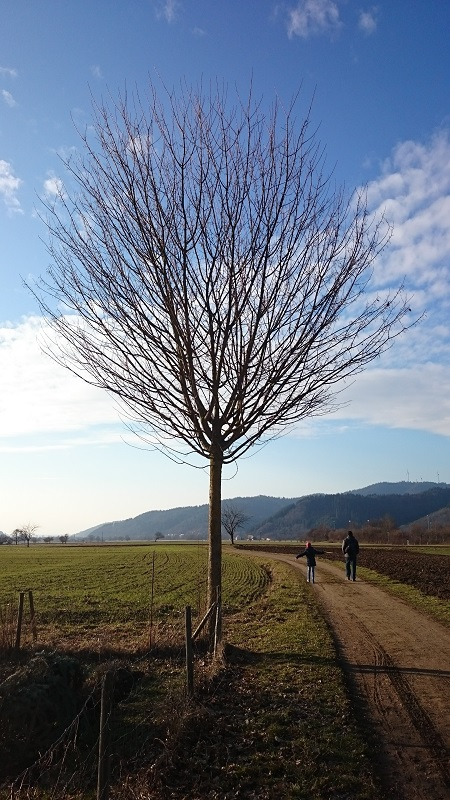 Baum-blauer Himmel