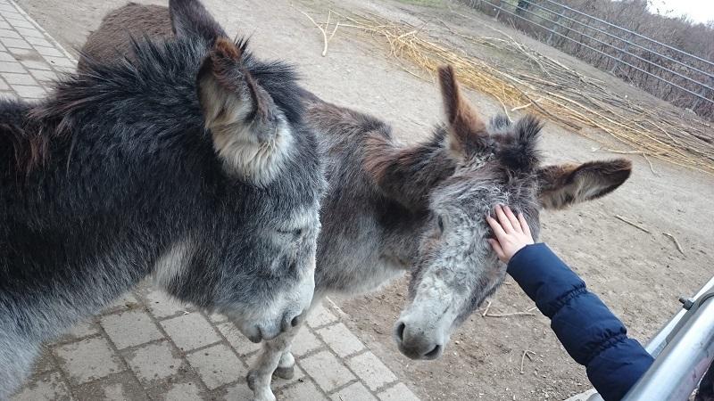 Mundenhof Esel