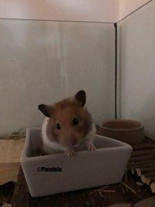 Kinder und Hamster - Haustiercheck