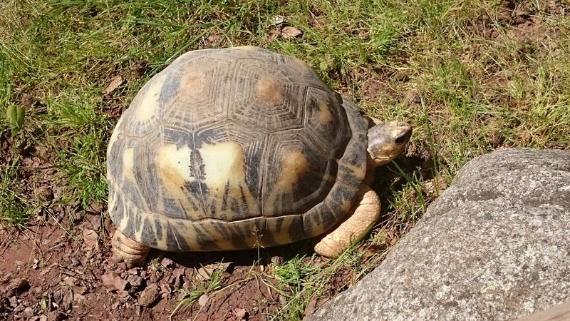 Schildkröte Mulhouse Zoo