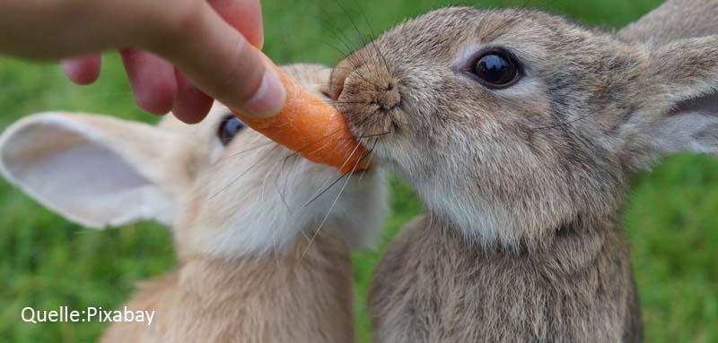 Kaninchen Karotte Traumreise